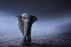 苏门答腊在沙漠的大象步行 免版税图库摄影