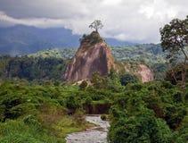 苏门答腊密林 库存图片