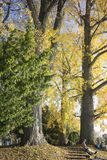 苏黎世公园 免版税库存图片