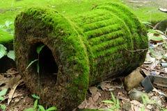 苔绿色杆 图库摄影