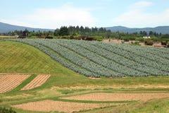 苗圃俄勒冈种植幼木 库存图片