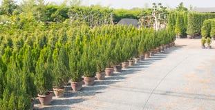 苗圃俄勒冈种植幼木 库存照片
