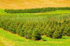 苗圃大农场结构树 免版税库存照片