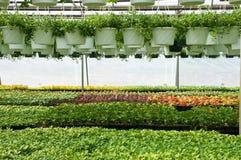 苗圃植物春天 免版税库存照片