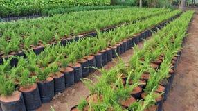 苗圃植物 库存照片