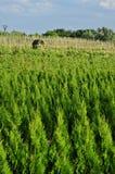 苗圃种植园结构树 免版税库存照片