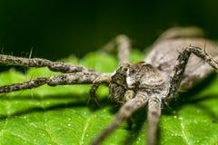 苗圃蜘蛛网 库存图片