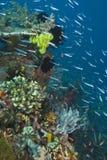 苗条鱼的最上端股肉 免版税库存照片