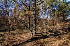 苛刻的乌克兰冬天在森林里 库存照片