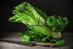 莴苣和菠菜在篮子 库存照片