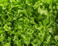 莴苣沙拉,片段 库存照片