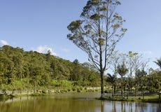 若茵维莱,巴西 免版税库存图片