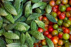 苦涩瓜和蕃茄 免版税图库摄影