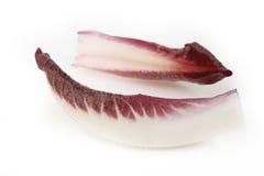 苦苣生茯叶子 免版税库存照片