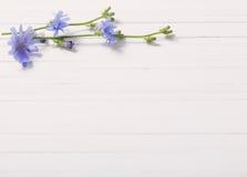 苦苣生茯花在白色木背景的 免版税库存图片