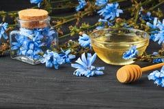 苦苣生茯菊苣属在瓶的intybus草本 图库摄影