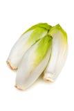 苦苣生茯菊苣属intybus 图库摄影