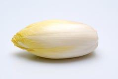 苦苣生茯 免版税库存图片