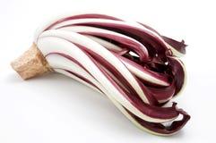 苦苣生茯cichorium intybus红色 免版税库存图片