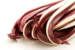 苦苣生茯cichorium intybus红色 免版税库存照片