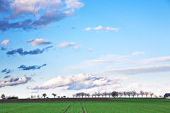 英亩云彩黑暗的横向结构树 免版税库存照片