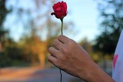 年轻英俊的人的手拿着在自然被弄脏的背景的一朵美丽的红色玫瑰 免版税库存图片