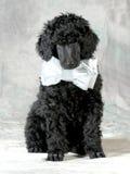 英俊的小狗 免版税库存照片