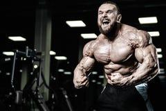 英俊的显示在健身房的适合白种人肌肉人力量 免版税图库摄影