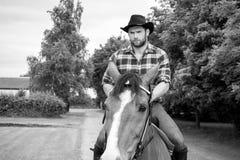 英俊的牛仔,在马鞍,马背adn起动的马车手 库存照片
