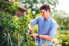 英俊的花匠修剪一点树,绿色晴朗的自然 免版税库存照片