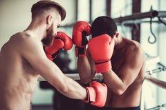 英俊的年轻拳击手 免版税库存照片