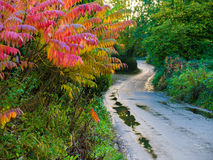 英国乡下公路 免版税图库摄影