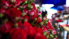 英国兰开斯特家族族徽小玫瑰花束  股票录像