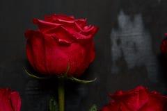 英国兰开斯特家族族徽的构成在深灰背景的 浪漫破旧的别致的装饰 顶视图 概念亲吻妇女的爱人 红色上升了 免版税库存照片