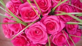 英国兰开斯特家族族徽美丽的开花  花特写镜头花束  影视素材