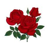 英国兰开斯特家族族徽花束 库存照片