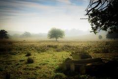 英国冬天早晨 免版税图库摄影