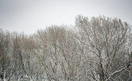 英国冬天风景场面 免版税图库摄影