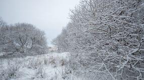 英国冬天风景场面 库存照片