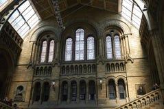 英国历史记录自然伦敦的博物馆 库存图片