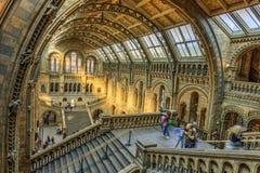 英国历史记录自然伦敦的博物馆 免版税图库摄影