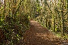 英国国家车道,通过豪华的绿色叶子编织 免版税图库摄影