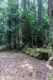 英国天鸽座加拿大山的绿色老森林  免版税库存图片