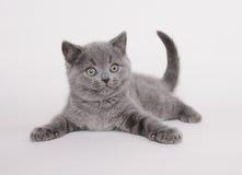 英国小猫shorthair 图库摄影