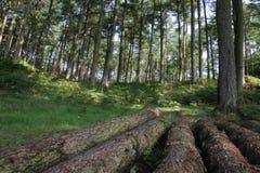英国峰顶区乡下 库存照片