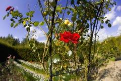 英国庭院庭院米德兰平原有机ryton warwickshire 库存照片