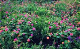 英国庭院样式 库存图片