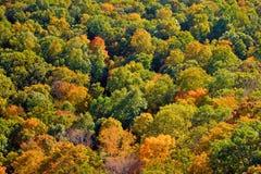 英国新的秋叶 免版税图库摄影