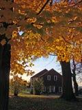 英国新的秋叶 免版税库存照片