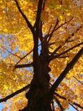 英国新的秋叶 图库摄影